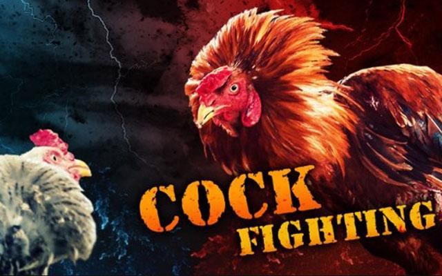 Panduan Bermain Situs Sabung Ayam Online SV388 Terpercaya