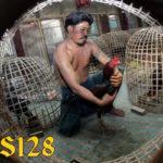 Cara Benar Merawat Ayam Bangkok Aduan Setelah Bertanding