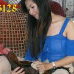 Cara Mandikan Ayam Bangkok Aduan Yang Benar