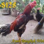 Kelebihan Serta Kekurangan Dari Ayam Bangkok Wiring Galih