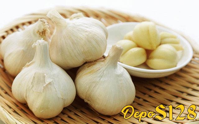 Manfaat Memberikan Bawang Putih Pada Ayam Bangkok Aduan