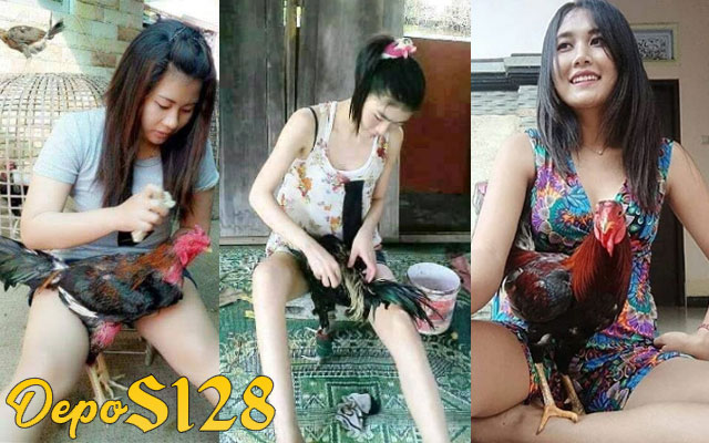 Manfaat Lengkap Memandikan dan Menjemur Ayam Bangkok Aduan