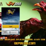 Cara Mudah Download Aplikasi Sabung Ayam S128 dan Sv388