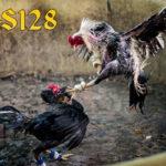 Cara Mudah Memilih Pakan Ayam Bangkok Yang Berkualitas
