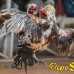 Taruhan Sabung Ayam Online Via Apk S128 Hp
