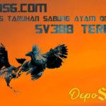 bcz956.com Situs Taruhan Sabung Ayam Online Sv388 Terbaru