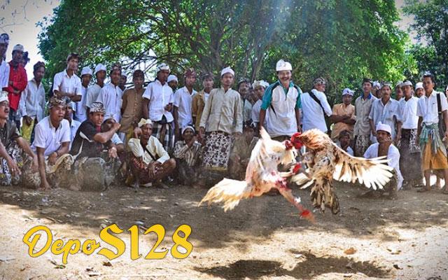 Arti Sebutan Untuk Permainan Sabung Ayam Tajen Bali