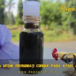 Cara Untuk Mengobati Congek Pada Ayam Aduan