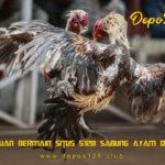 Panduan Bermain Situs S128 Sabung Ayam Online