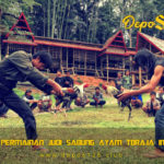 Situs Permainan Judi Sabung Ayam Toraja Indonesia