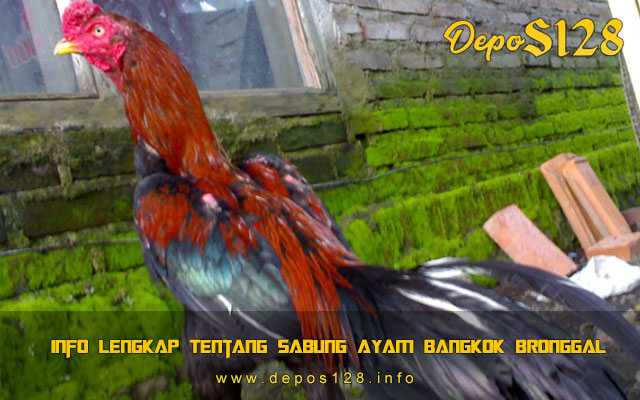Info Lengkap Tentang Sabung Ayam Bangkok Bronggal