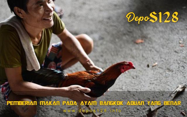 Pemberian Makan Pada Ayam Bangkok Aduan Yang Benar