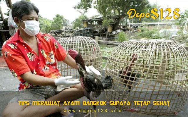 Tips Merawat Ayam Bangkok Supaya Tetap Sehat