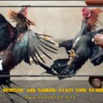 Cara Bermain Judi Sabung Ayam S128 SV388 Hp