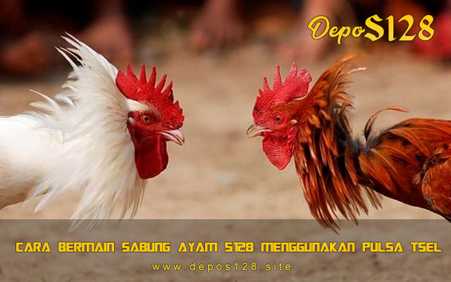 Cara Bermain Sabung Ayam S128 Menggunakan Pulsa Telkomsel
