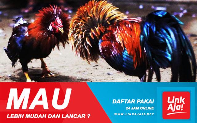 Promo Cashback Sabung Ayam Via Deposit Aplikasi Link Aja