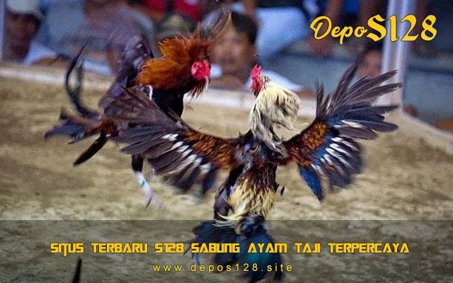 Situs Terbaru S128 Sabung Ayam Taji Terpercaya