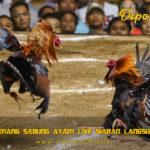 Tips Menang Sabung Ayam Live Siaran Langsung S128