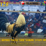 Agen Deposit Pulsa S128 Sabung Ayam Online