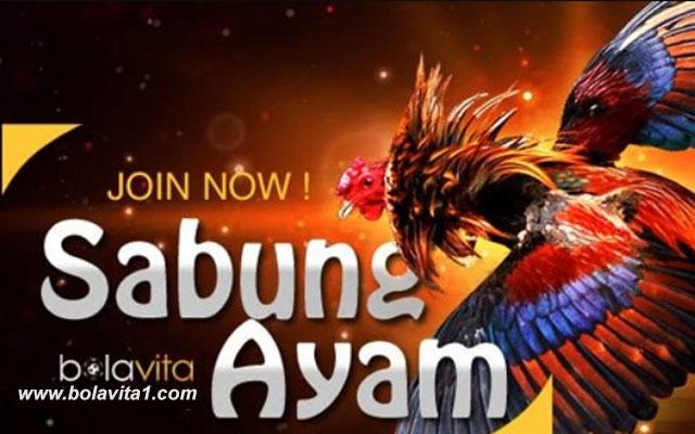Bandar Sabung Ayam Online Yang Terkenal Di Indonesia