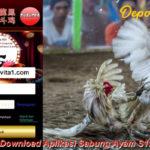 Cara Download Aplikasi Sabung Ayam S128 Terbaru