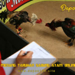 Cara Menang Taruhan Sabung Ayam Online 2020