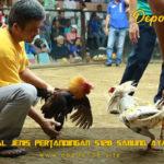 Mengenal Jenis Pertandingan S128 Sabung Ayam Online