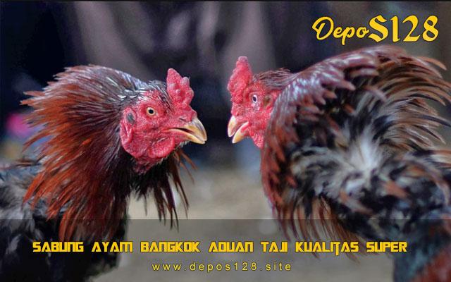 Sabung Ayam Bangkok Aduan Taji Kualitas Super