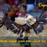 Situs Nonton Sabung Ayam S128 Lancar Dan Cepat