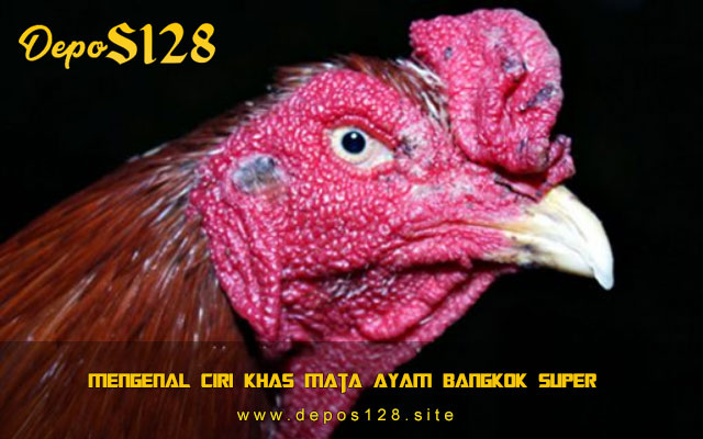 Mengenal Ciri Khas Mata Ayam Bangkok Super