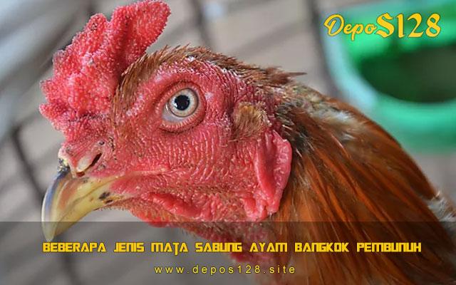 Beberapa Jenis Mata Sabung Ayam Bangkok Pembunuh