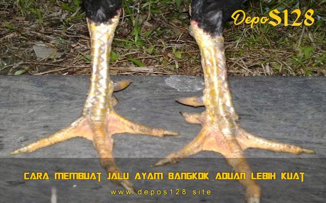 Cara Membuat Jalu Ayam Bangkok Aduan Lebih Kuat