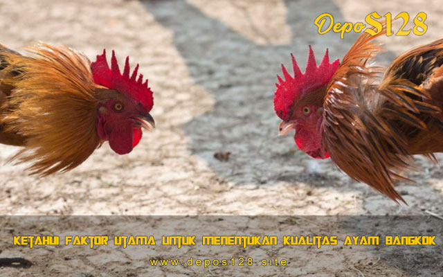 Ketahui Faktor Utama Untuk Menentukan Kualitas Ayam Bangkok