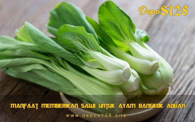 Manfaat Memberikan Sawi Untuk Ayam Bangkok Aduan