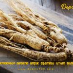 Manfaat Pemberian Ginseng Untuk Stamina Ayam Bangkok Aduan