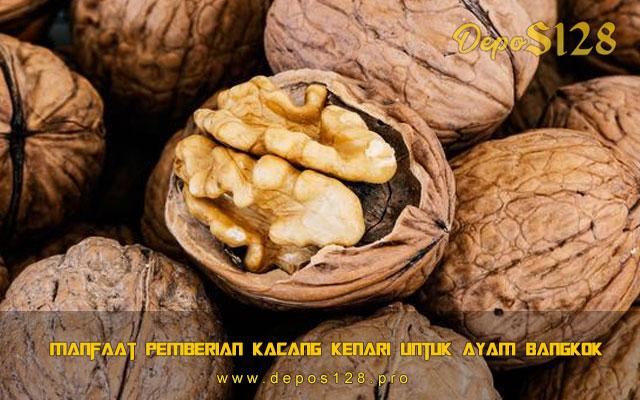 Manfaat Pemberian kacang Kenari Untuk Ayam Bangkok