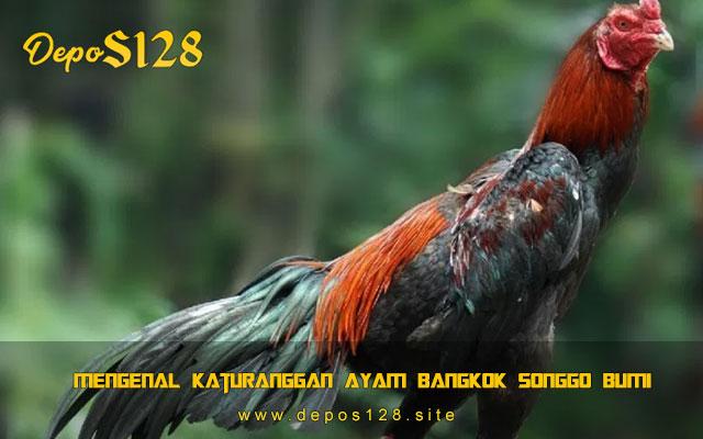 Mengenal Katuranggan Ayam Bangkok Songgo Bumi