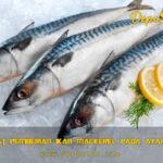 4 Manfaat Pemberian Ikan Mackerel Pada Ayam Bangkok