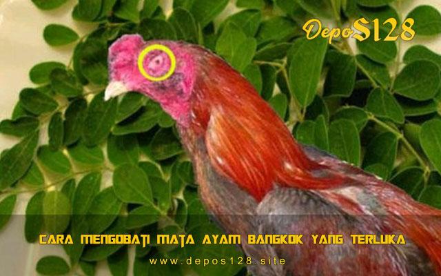 Cara Mengobati Mata Ayam Bangkok Yang Terluka