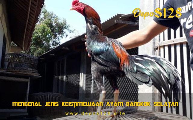 Mengenal Jenis Keistimewaan Ayam Bangkok Selatan