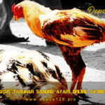 Sv3888.site Situs Taruhan Sabung Ayam Online SV388 Terpercaya