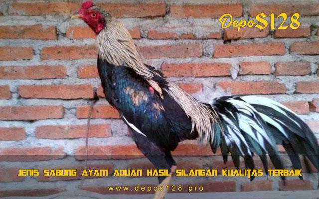 Jenis Sabung Ayam Aduan Hasil Silangan Kualitas Terbaik