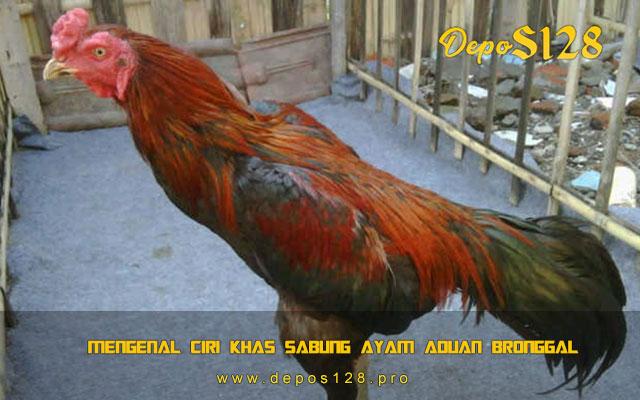 Mengenal Ciri Khas Sabung Ayam Aduan Bronggal
