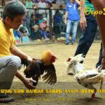 Situs S128 Bandar Sabung Ayam Online Terbaik