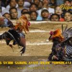 Situs Sabung Ayam Online Paling Terpercaya 2020