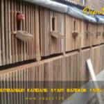 Tips Membangun Kandang Ayam Bangkok Yang Nyaman