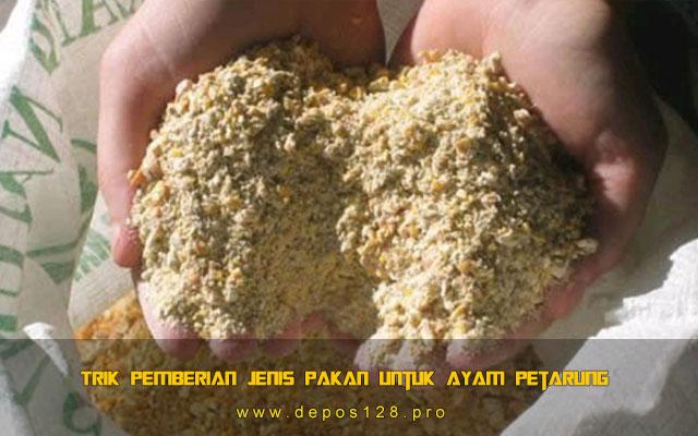 Trik Pemberian Jenis Pakan Untuk Ayam Petarung