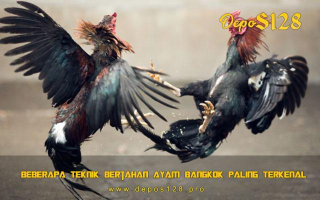 Beberapa Teknik Bertahan Ayam Bangkok Paling Terkenal