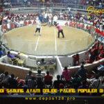 Arena Judi Sabung Ayam Online Paling Populer Di Indonesia