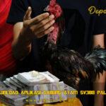 Situs Download Aplikasi Sabung Ayam Sv388 Paling Baru